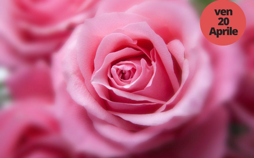 Il professore delle rose